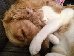 dog and cat sleeping together. Simple Sleeping Cat And Dog Sleeping Together On Dog And Sleeping Together A