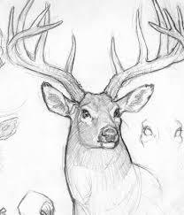 Anthony Vanarsdale Sketchbook Sketch Away Drawings Deer Sketch