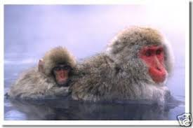 Snow Monkey Baby Japanese Macaque Animal Poster