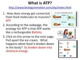 what is atp biologyinmotion com atp index html