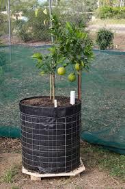 Best 25 Small Fruit Trees Ideas On Pinterest  Fruit Tree Garden Pots For Fruit Trees