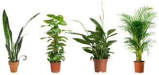 cheap office plants. Air-purifying-Plants-super-Pack Cheap Office Plants R