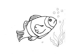 Disegni Da Colorare Bambini I Pesce Pagliaccio
