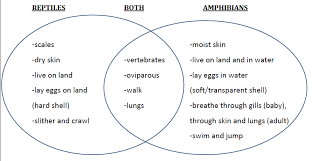 Difference Between Amphibians And Reptiles Venn Diagram Pin By Jenny Bagby Lake On Ed 7450 Inquiry Based Learning