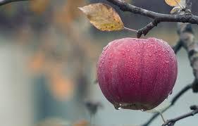how apple cider vinegar help you for