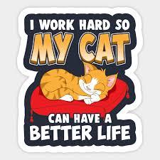 funny cat kitten humor sayings cat