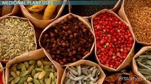 medicinal plants uses definition video lesson transcript medicinal plants uses definition video lesson transcript com