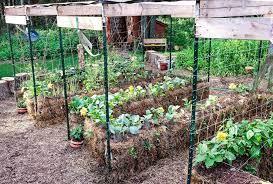 straw bale gardening edible munities