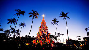 My Kind Of Christmasunder The Palm Treesbucket List Wish Christmas Tree Hawaii