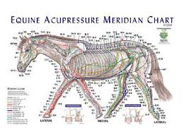 Canine Acupuncture Meridian Chart Animal Acupressure Charts