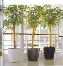 office indoor plants. Office Indoor Plants. Plants I L