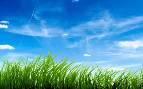 grass and sky backgrounds. Exellent And Blue Sky Green Grass Wallpapers  HD For And Backgrounds E