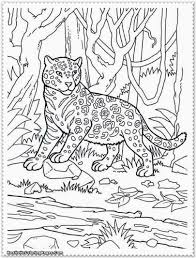 Small Picture Realistic Jungle Animal Coloring Pages Realistic Coloring Pages