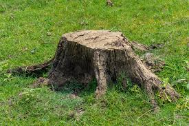 the best ways to remove a tree stump