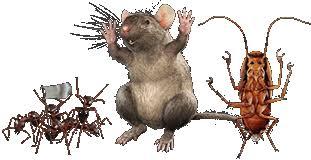 Image result for pests