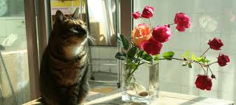 are roses poisonous to cats your