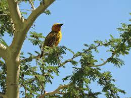 """Résultat de recherche d'images pour """"images oiseaux branches"""""""