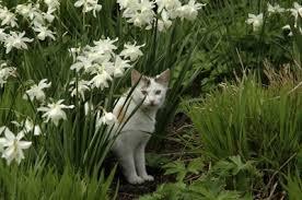 cat repellent for garden. Cat Repellent: How To Keep Cats Out Of The Yard Repellent For Garden E