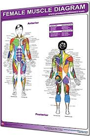 Body Chart Physical Therapy Amazon Com Productive Fitness Laminated Fitness Poster