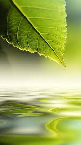 nature green wallpapers for iphone