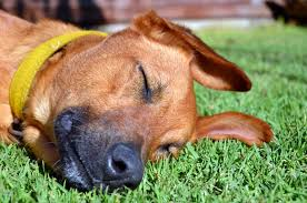 artificial grass for pets. Synthetic Grass-designrulz (2) Artificial Grass For Pets