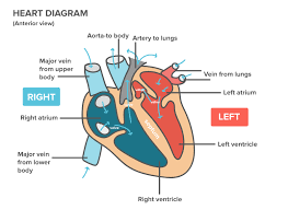 Blood Pressure Diagram What Is Hypertension Definition Of High Blood Pressure Article