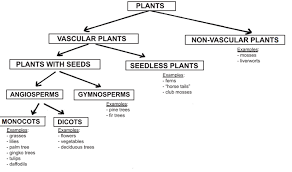 Classification Of Plants Vascular And Non Vascular Plant