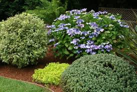Small Picture Garden Design Garden Design with evergreen shrubs for landscaping