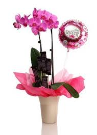 orchids make the perfect gift orchid planters orchid care orchids gift wrapping