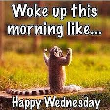 Wednesday Quotes Awesome Happy Wednesday Quotes Funny Its Wednesday Sayings