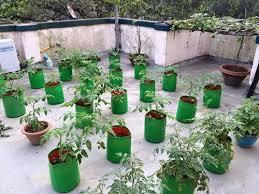 hyderabad terrace vegetable garden