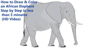elephant color.  Elephant How To Draw U0026 Color An African Elephant Step By In Less Than 5 Minutes  HD Video Intended T