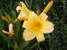 flowers 3 and 4 also look like day lilies given the pictures from lily garden iu0027m going to say that is correct identification flowers57