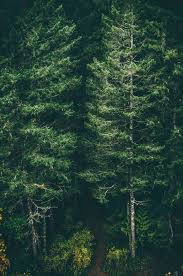 iphone 6 background. Exellent Background Green Forest Trees Iphone 6 Plus Wallpaper Background With Iphone Background P