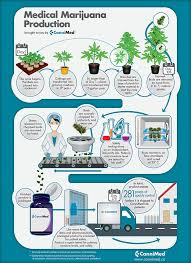 – Canada's Process Infographic - Cannabis Medical Cannimed Production