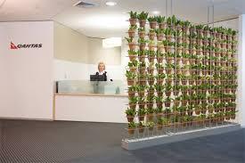 Wall Climbing Plants Nz