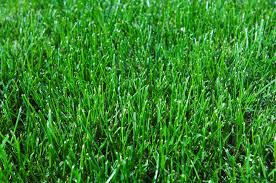 Grass Couch Autumn Tips For Your Lawn And Garden Munns Gardening Blog