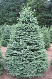 19 Best Artificial Christmas Trees 2017  Best Fake Christmas TreesTypes Of Fir Christmas Trees