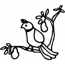Small Picture Partridge In Pear Tree Coloring Page