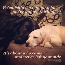 Quotes About Pets And Friendship Simple 48 Quotes That Will Change The Way You Think About Labradors