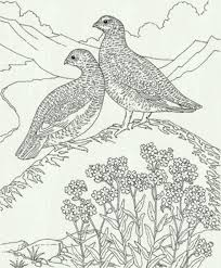 bird coloring pages to print free coloring sheets