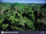 imagem de Alta Floresta Mato Grosso n-16