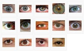 Iris Color Chart Green Eye Color Chart Eye Color Chart Different
