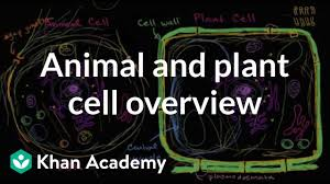 Comparing Plant And Animal Cells Venn Diagram Answers Overview Of Animal And Plant Cells Video Khan Academy