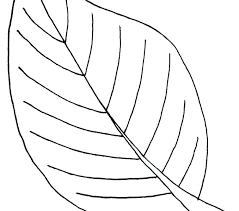 free printable maple leaf coloring page color pages leaves with col
