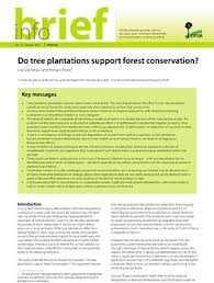 do tree plantations support forest conservation center for do tree plantations support forest conservation