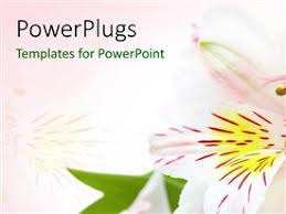 Flower Powerpoint 5000 Orchid Flower Powerpoint Templates W Orchid Flower