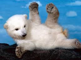cute baby polar bear wallpapers wallpaper high quality 1600x1200