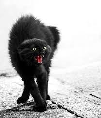 Image result for black cat
