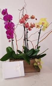 orchid pion gift set